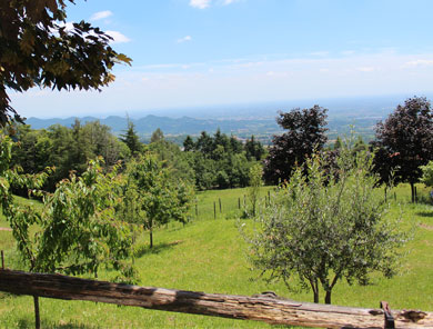 agriturismo_al_covolo_tree-nature-home-1